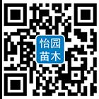1597885034209998_副本.png